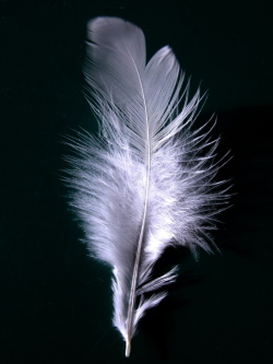 White Feather Campaign