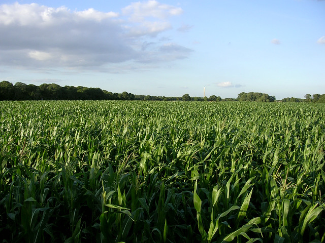 Corn Farmers dominate the landscape in the midwestern U.S.