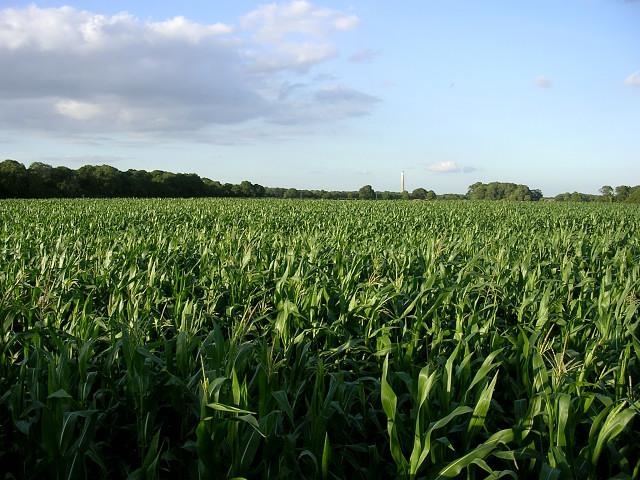 Corn Farmers dominate the landscape in the midwestern U.S.