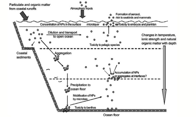 Figure 3. Schematic diagram showing the behavior and effects of NPs on marine environments as well as the organisms at risk of exposure. (Image retrieved from Klaine et al., 2008)
