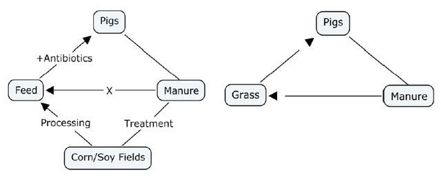 Figure 1. Conceptual nutrient cycles of conventional pig farming (left) and alternative methods, specifically pasture-raised pigs (right).