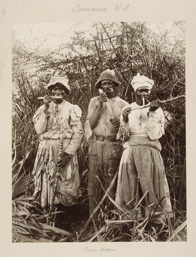 Jamaican cane cutters, mid 1800s after emancipation