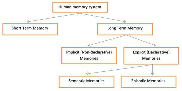 Human memory system