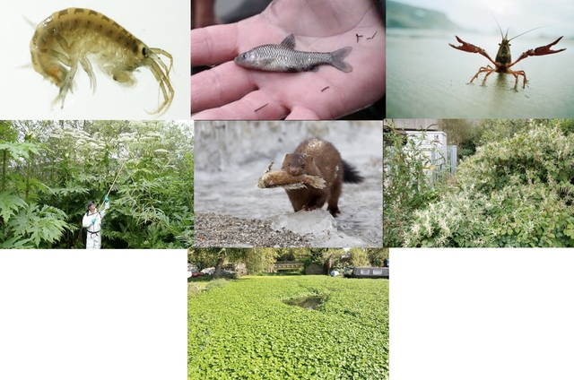 Critical invasive species in the U.K.