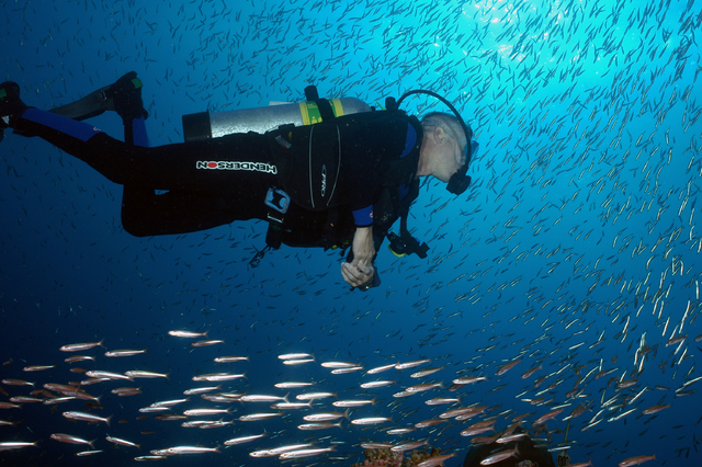 A scuba diver swims amid a school of fish at Flower Garden Banks National Marine Sanctuary.